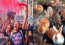 La defensora de animales Mythical Mia participó en el rescate de los conejos. Foto: Instagram.