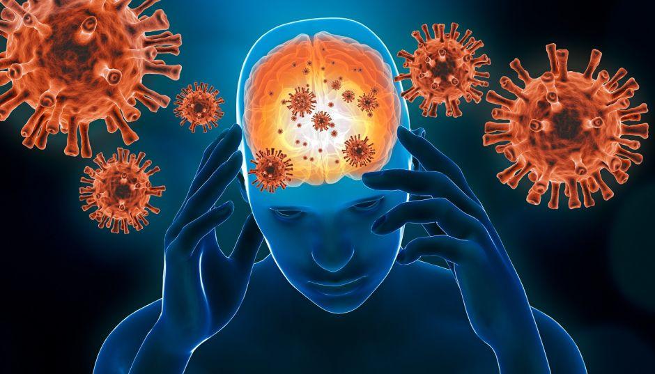 El SARS-CoV-2 podría entrar en el cerebro a través de la nariz